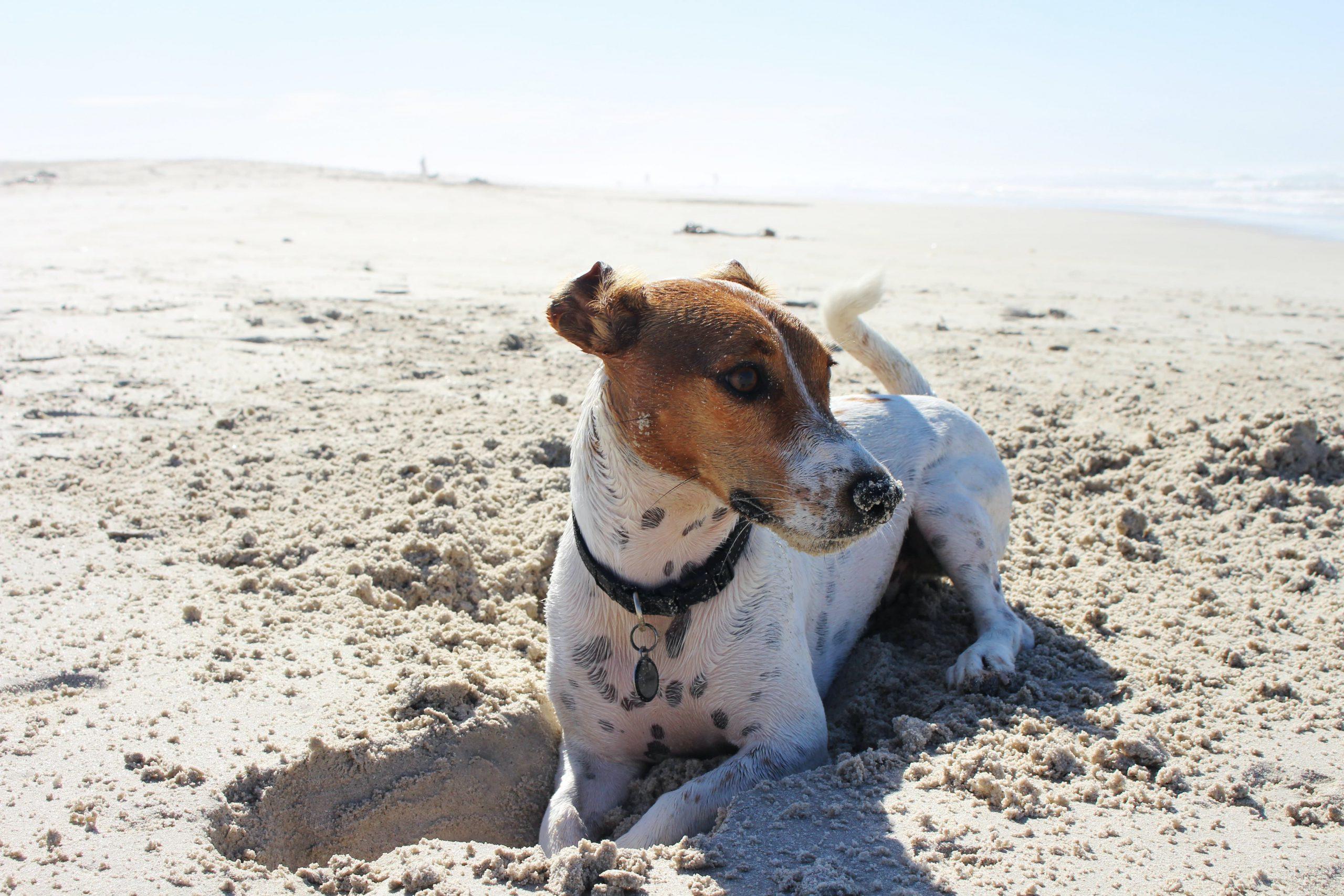 cão na praia - praias para cães em Portugal 2020